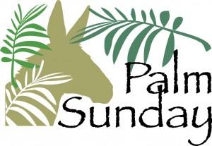 palm11c